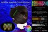 TDolls - Synthia Jeweled Comb 4Dinkies HUD (Add) Cmt