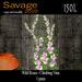 Wild Roses - Climbing Vines