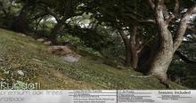(Fundati) Premium Oak Trees Fatpack