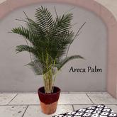 {CdB} Areca Palm