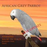 African grey parrot (new)
