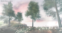 LB Black Walnut Tree Animated 4 Seasons
