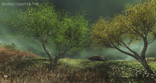 LB Beaked Hazelnut Tree Animated 4 Seasons