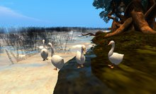 Geese! Animated, sculpted, and honking!