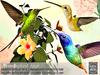Tlc%20hummingbird%20bush vendor