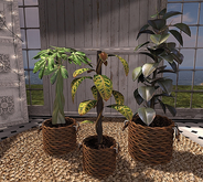 CJ Basket Planter Set - c+m