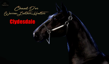 Cheval D'or / TeeglePet Clydesdale / Warren Leather Show Halter [HUD]