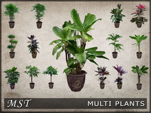 Mst Menu Driven Poted Plant