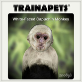 Zooby White-Faced Capuchin Monkey BOXED