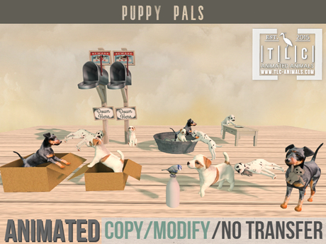 Puppy, puppies, set