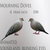 Mourning doves 2