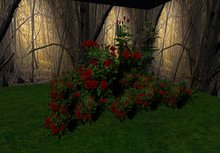 rose bush crimson 4 huge