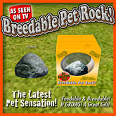 Breedable Pet Rock (BOX)