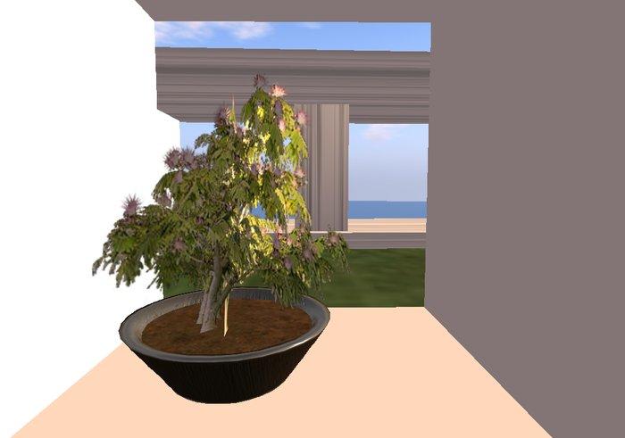 Second Life Marketplace I D Mimosa Bonsai