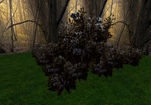 rose bush gothic black 3 huge