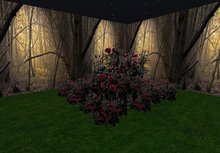 rose bush gothic blood red 3 huge