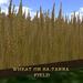 UD Sa-Tarna Wheat Field