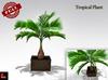 Full Perm Tropical Plants - Palm Tree - Fern Palm Plant