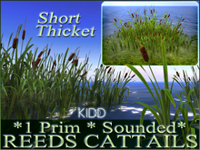 15 KIDD REED CATTAIL* Short Thickets * 6 Seasonal Textures * Scalable * Tintable * Sounded