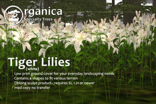 [ Organica ] Tiger Lilies (White)