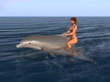 Trickshow Dolphin