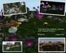 Habitat / Home / Garden for Meeroos or other pets