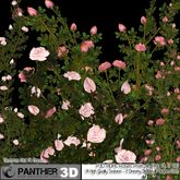 P3D ADAs Roses Pretty In Pink Collection Pt 2