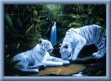 Tiger Falls Animated Picture