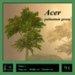Maple tree green (Acer palmatum)