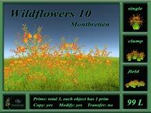 Wildflowers 10 Montbretien