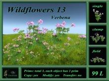 Wildflowers 13 Verbena