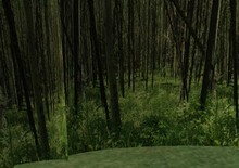 Pine Forest Privacy Screen