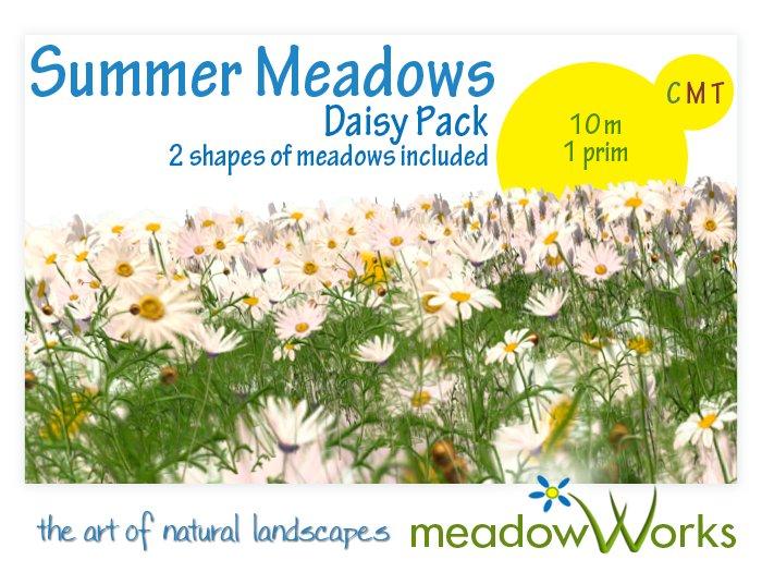 summer meadow daisies pack