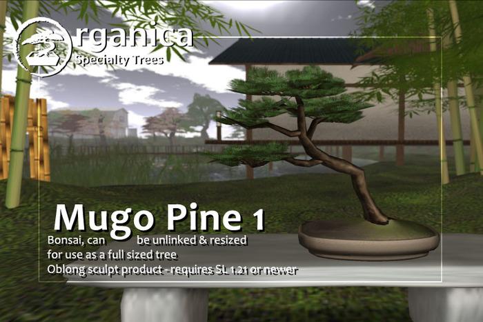 [ Organica ] Mugo Pine 1 (MC)