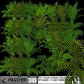 P3D ADA's Tropical Series, Indoor/Outdoor Palms