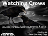 Dead Center: Watching Crows