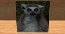 card: LEMUR (I LOVE EVERY CUTE AND FURRY INCH OF YOU!)