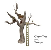 Cherry Tree (boxed)