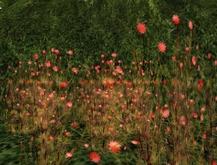 red flower bush undergrowth *OTM*