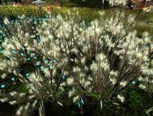 *otm* fairy flowers