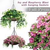 Hanging Plants Ivy - Raspberry Blust Flowers FULL PERM