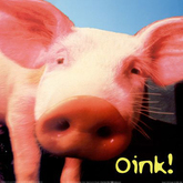 pig sound box