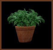 ☆ Bliss Designs ~ Tropical House Plant & Ceramic Pot ~ 4 Prims ~ Tropical Plant  For Your House or Garden !