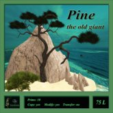 Old Pine tree - giant