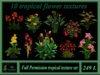 10 tropical flower textures