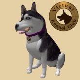 VKC® Siberian Husky - Artificially Intelligent (AI) Trainable Dog - No Food Required - Virtual Kennel Club - Pathfinding