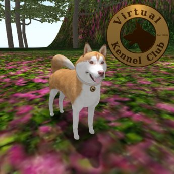 VKC® Copper Siberian Husky - Artificially Intelligent (AI) Trainable Dog - No Food Required - Pathfinding Enabled