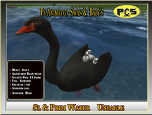Ps Animated  Black  Swan  Free Swimming Bird