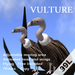 Animated vulture
