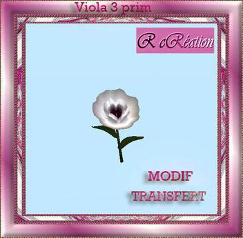 Viola white heart purple